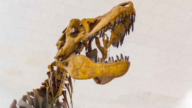 Британский археолог-любитель нашел останки уникального динозавра