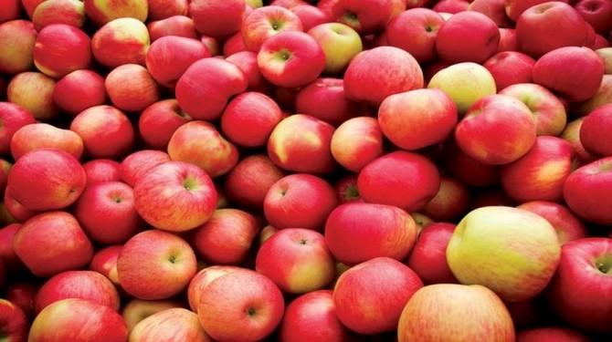 В Украине ожидают больших урожаев яблок