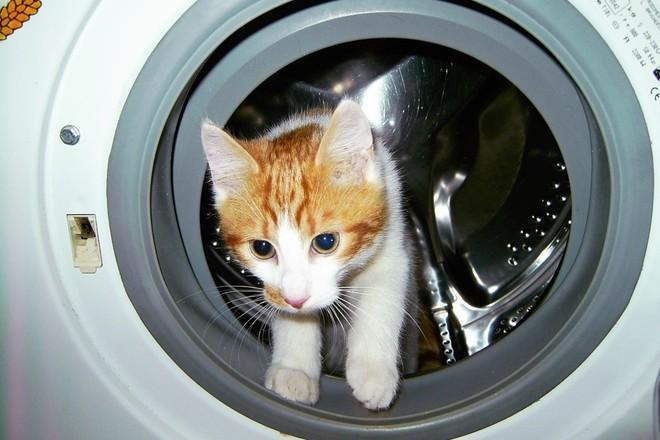 В Австралии кот выжил после 12 минут в работающей стиральной машине