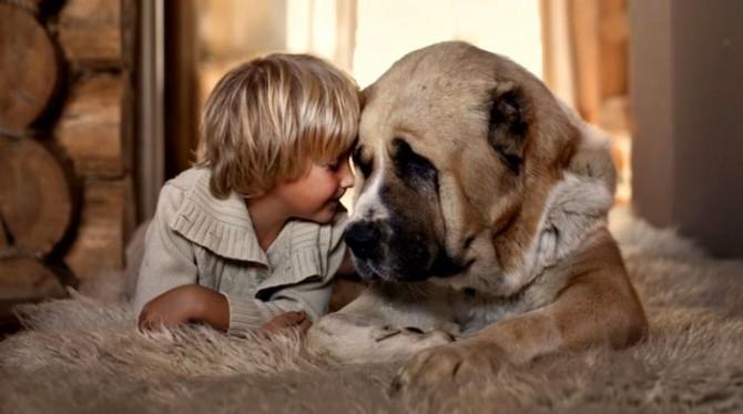 Американские ученые вывели формулу для расчета возраста собаки в