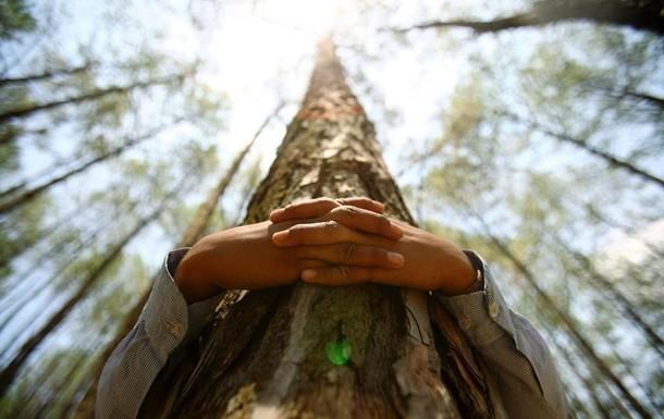 В Финляндии пройдет первый чемпионат мира по обниманию деревьев
