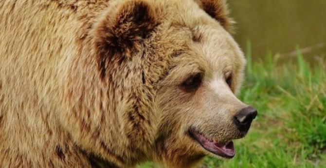 В США медведь попытался ворваться в самолет (ВИДЕО)