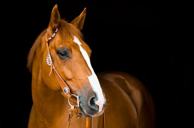 Учёные разрабатывают дешёвое лекарство от коронавируса из антител лошадей