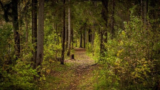 Ученые из США предложили искать пропавших в лесу с помощью растений