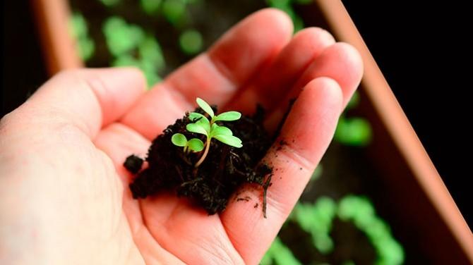 Американский пенсионер погиб из-за горшечного растения