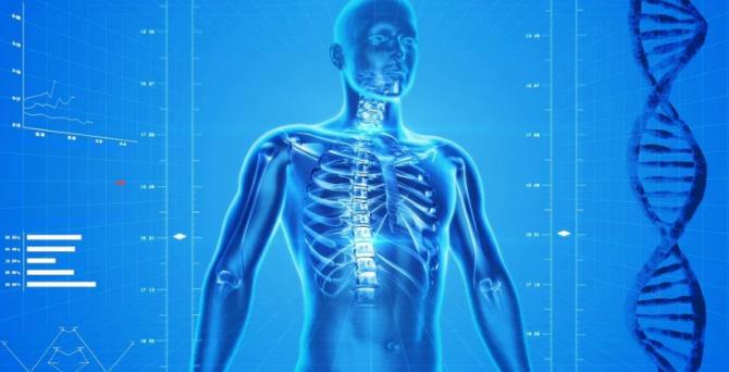 Ученые выяснили, с какой частотой обновляется организм человека