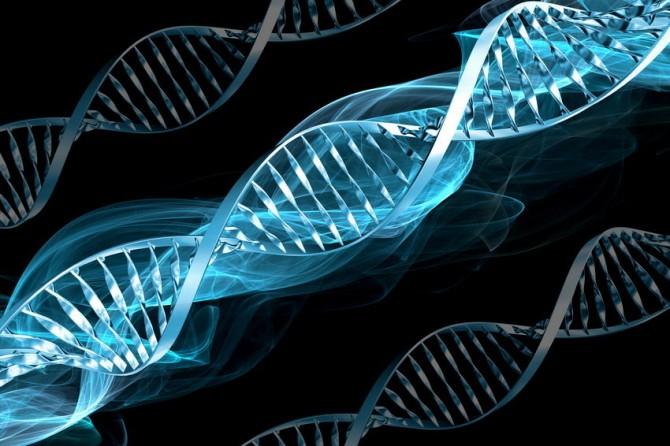 Ученые сравнили наконечник шнурка с ДНК человека