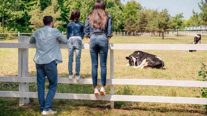 Новый тренд по снятию стресса с коровами появился в Нидерландах