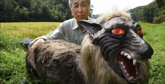 В Японии создали роботов-волков для отпугивания медведей
