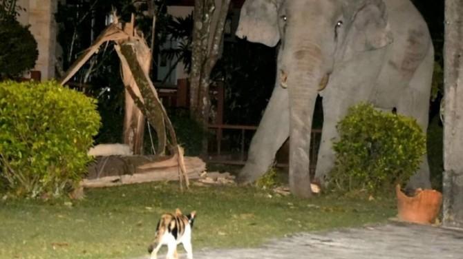 Храбрая кошка прогнала из сада воришку-слона