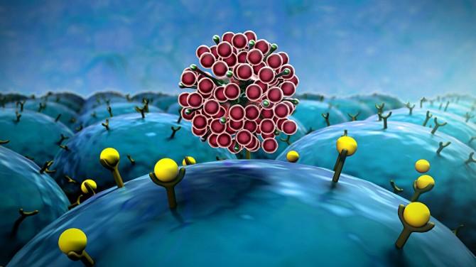 Ученые оценили способность мутаций коронавируса быстро распространяться