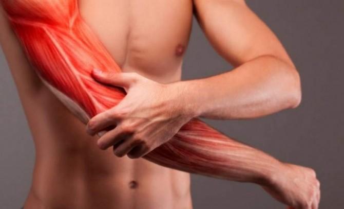 Магнитные поля помогут улучшить здоровье мышц