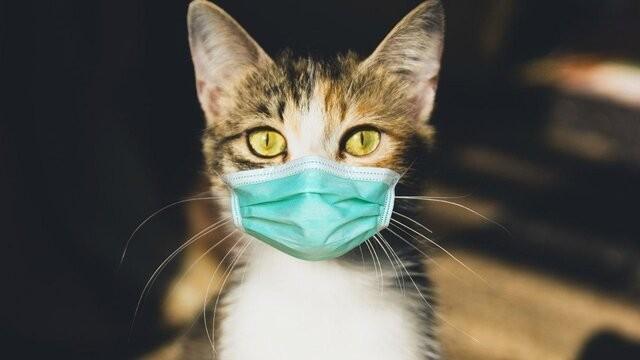В Швейцарии зафиксирован первый случай заражения кошки коронавирусом