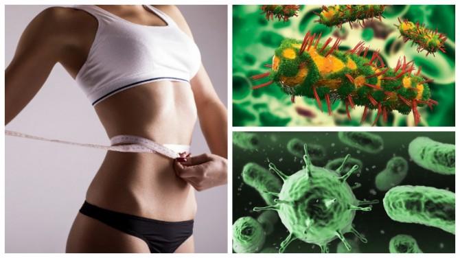 Французские ученые нашли бактерии, которые помогают сбросить лишний вес