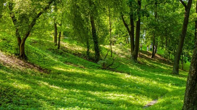 Шведские ученые раскрыли тайну вечнозеленых деревьев