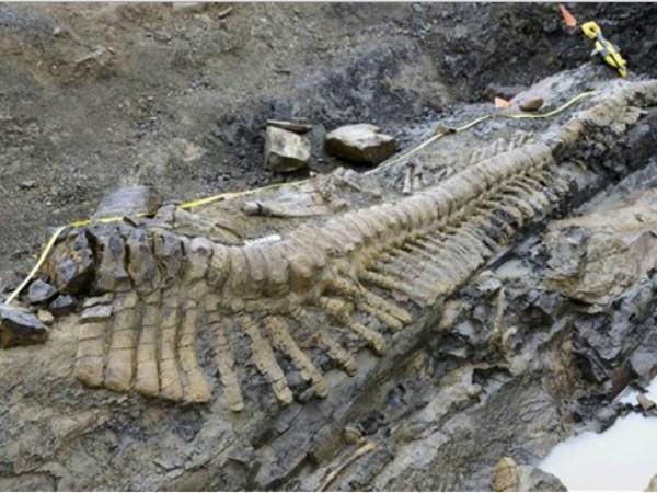 Ученые нашли останки самого большого динозавра