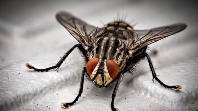 Ученые выяснили, почему сложно убить домашних мух