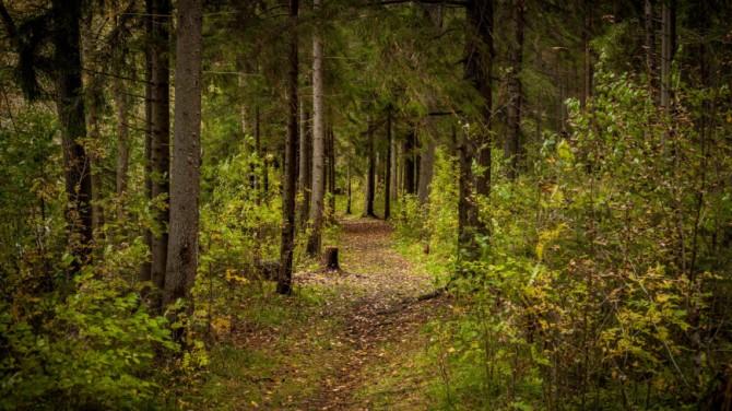 Наличие деревьев рядом с домом снижает риск депрессии