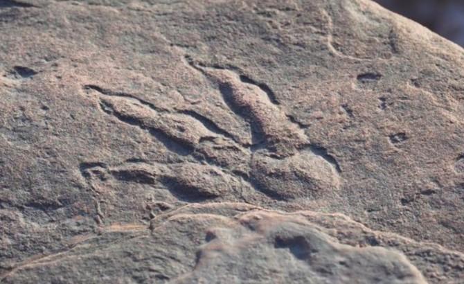 Четырехлетняя девочка случайно нашла на пляже след динозавра