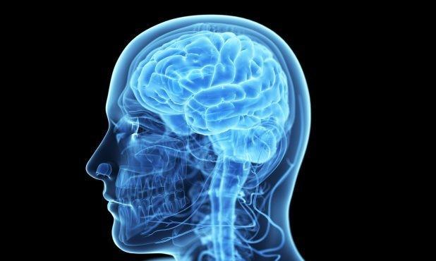 В мозгу человека обнаружили «зоны риска»