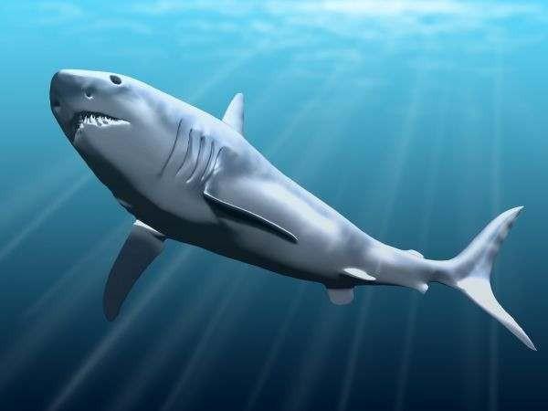 В Марокко нашли следы доисторической рыбы размером с акулу