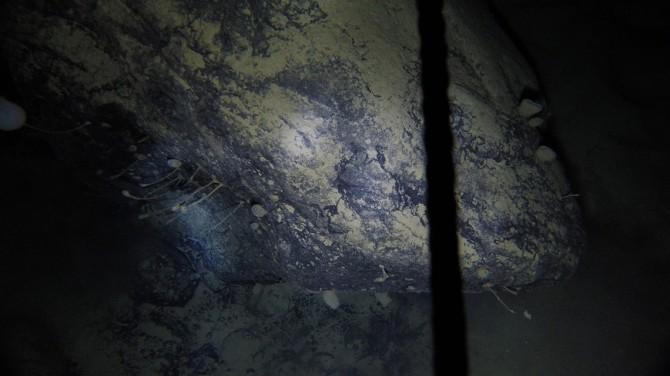 Под ледником Антарктиды нашли неизвестных существ