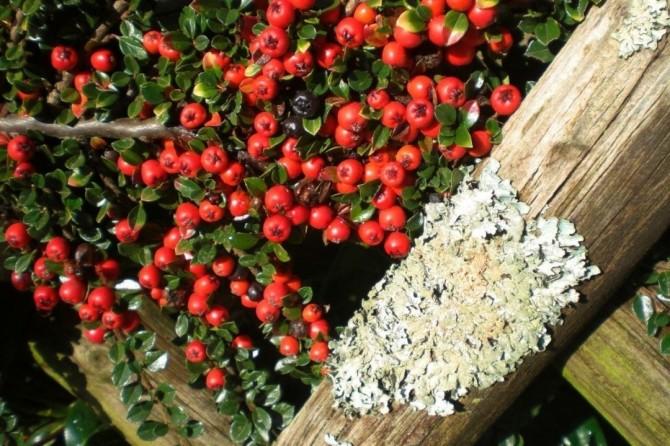 В Британии обнаружили поглощающее автовыхлопы супер-растение