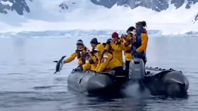 Спасаясь от косаток, пингвин запрыгнул в лодку к туристам (ВИДЕО)