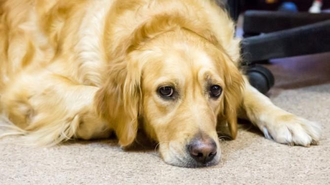 Ученые доказали способность собак испытывать ревность
