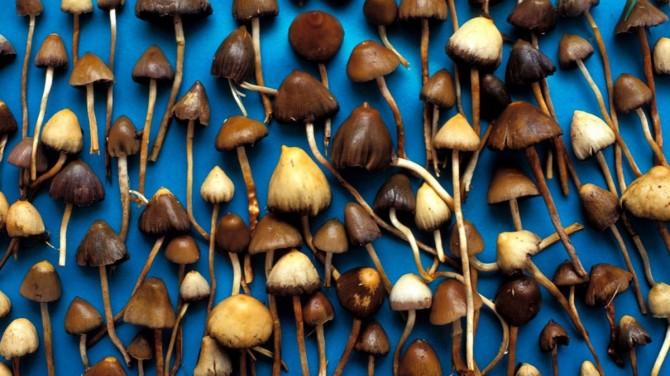 Британские ученые предложили лечить депрессию галлюциногенными грибами