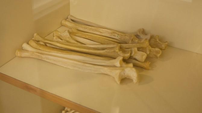 В пустыне Атакама обнаружили кости неизвестного науке динозавра