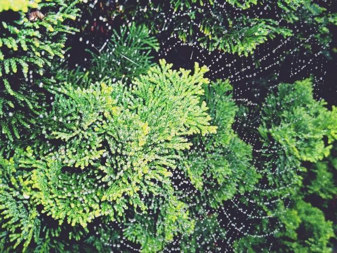 Как облагородить свой загородный дом: преимущества хвойных растений