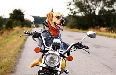 В Мелитополе мужчина возит собаку на мотоцикле вместо сигнализации (ВИДЕО)