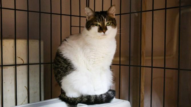 Ученые выяснили, что кошки любят сидеть в невидимых коробках