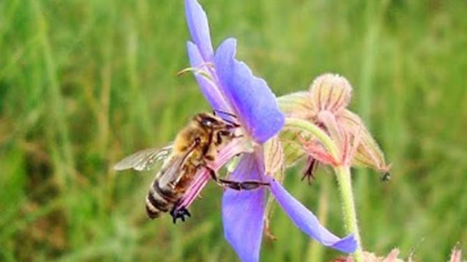Ученые из Нидерландов научили пчел выявлять коронавирус