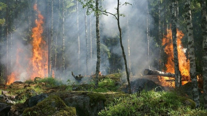 Африканские племена начали сжигать леса почти 93 тысячи лет назад