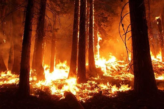 Ученые из США нашли следы первых лесных пожаров в истории