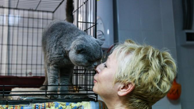 Ученые перечислили пять типов отношений между людьми и кошками