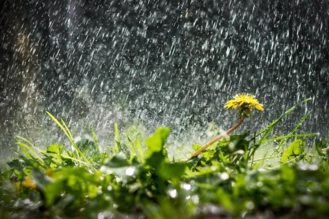 Синоптики обещают украинцам дождливые выходные