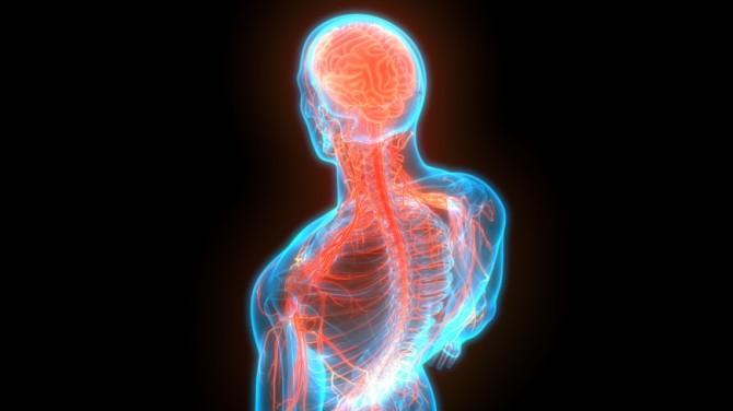 Британские ученые создали надувной имплант для спинного мозга