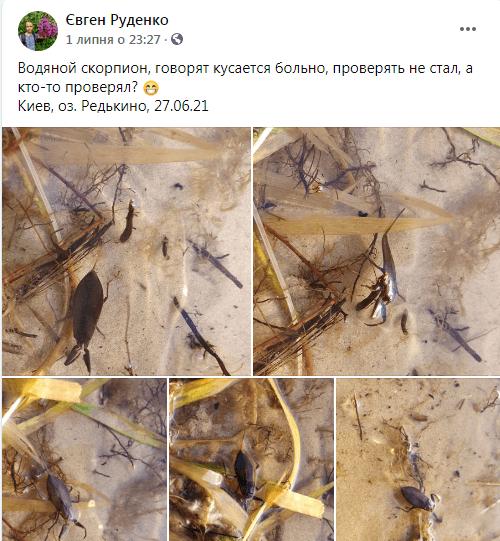 В одном из киевских озер выявили скорпионов
