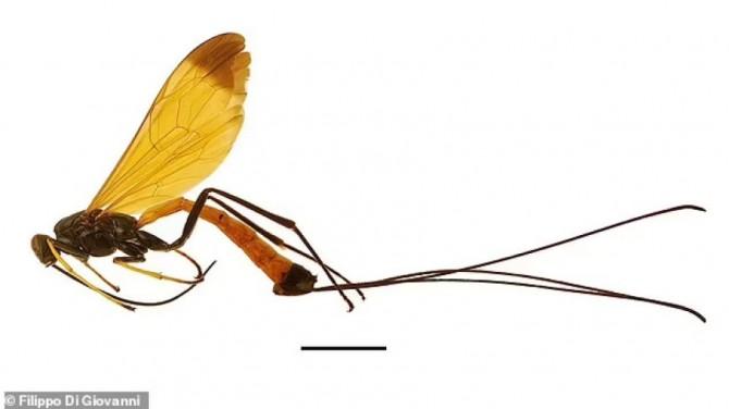В Южной Америке открыли новый вид осы