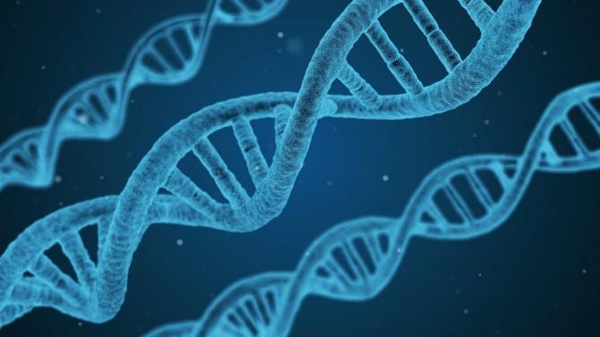 Ученым удалось установить, как ДНК влияет на уязвимость к коронавирусу