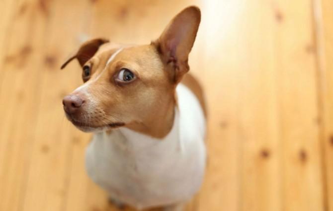 Собаки умеют распознавать ложь людей - ученые