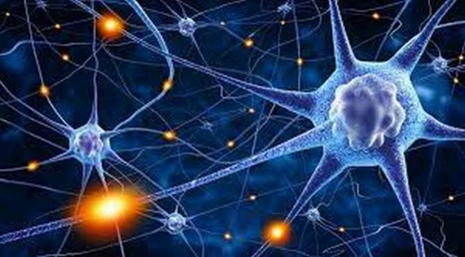 Французские ученые разработали уникальные синтетические клетки мозга