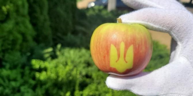 В Виннице в честь Дня Независимости вырастили яблоки с Трезубцем