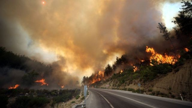 Ученые заявили об опасности дыма лесных пожаров во время пандемии коронавируса