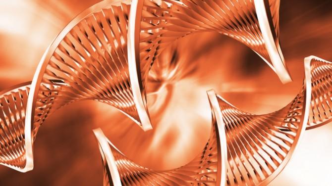 Генетический анализ указал на отличия людей от приматов